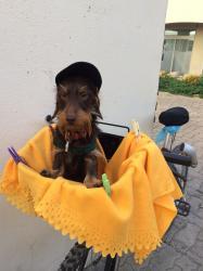 Isidore en vacances