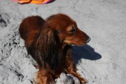 Ixia 9 mois sur la plage 1